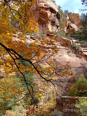 Fall Colors 6497 Poster