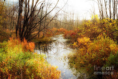 Fall Colors  Poster by A New Focus Photography