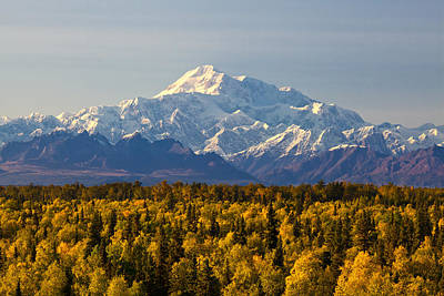 Fall Colors And Denali Poster by Dora Miller