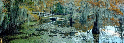 Fall Colors Come To Caddo Lake Poster by Geoff Mckay