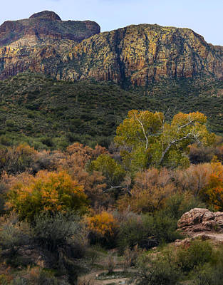 Fall Colors In The Desert Poster by Dave Dilli