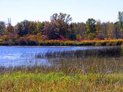 Fall Colors Over The Pond Poster