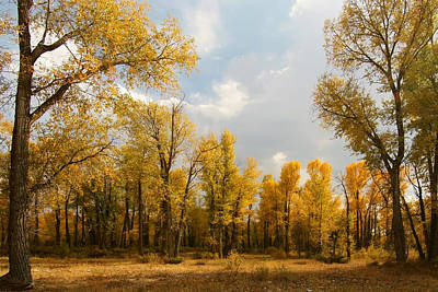 Poster featuring the photograph Fall Cottonwoods In Gros Ventre by Jeremy Farnsworth