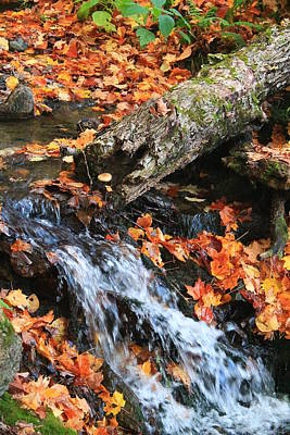 Poster featuring the photograph Fall Creek by Alicia Knust