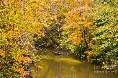 Fall Creek Foliage Poster