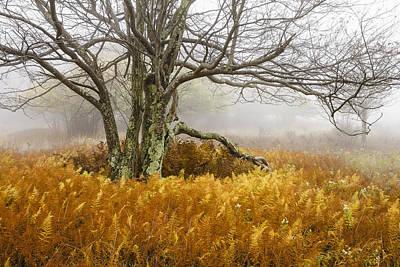 Fall Ferns And Fog Poster by Bill Swindaman