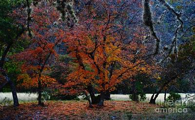 Fall Foliage At Lost Maples State Park  Poster