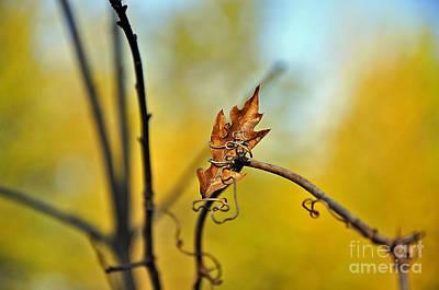 Fall Foliage Foiled Poster