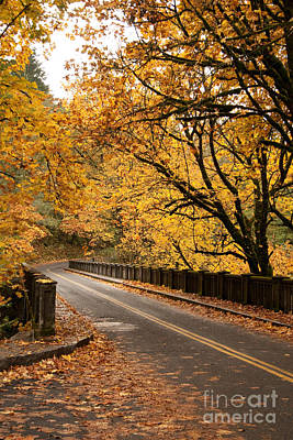 Fall Foliage On The Highway Poster