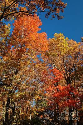Fall Foliage Poster by Patrick Shupert