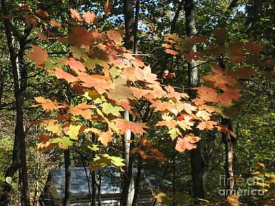 Fall Foliage Poster by Robin Renee  Blanc