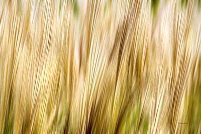 Fall Grass Abstract Poster by Christina Rollo