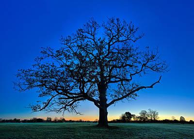 Fall Great Oak At Dawn Poster