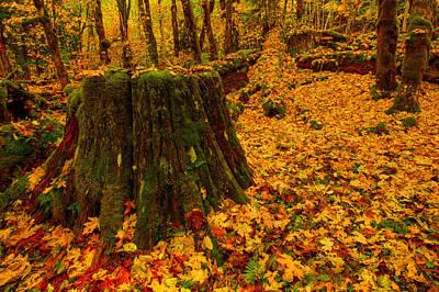 Fall Leaves Mosaic Poster by Dan Mihai