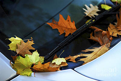 Fall Leaves On A Car Poster