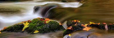 Fall Leaves On Mossy Rocks Poster