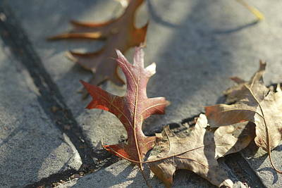 Autumn Oak Leaves On Sidewalk Poster by Valerie Collins