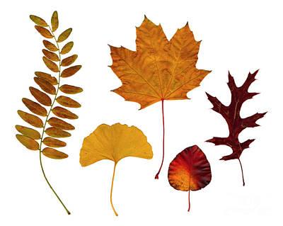Fall Leaves Poster by Tony Cordoza