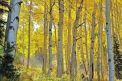 Fall Morning Shine Poster