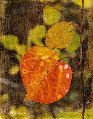 Fall Quaking Aspen Poster