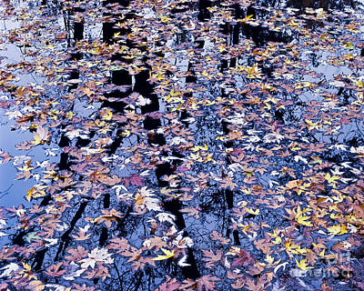 Poster featuring the photograph Fall Reflections by Alan L Graham