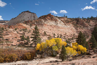 Poster featuring the photograph Fall Season At Zion National Park by John M Bailey