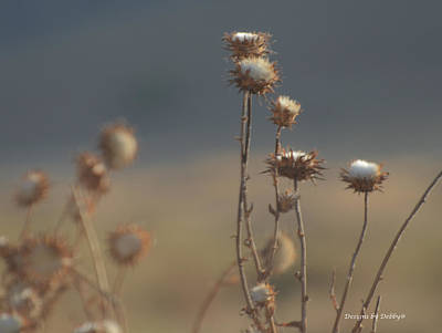 Poster featuring the photograph Fall Thistles At Dusk by Debby Pueschel