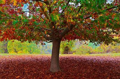 Fall Tree View Poster