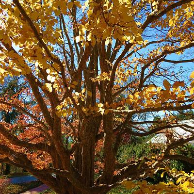 Fall Tree Poster by Vijay Sharon Govender