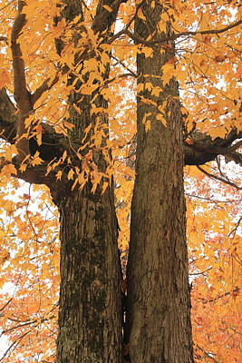 Poster featuring the photograph Fall Trees by Amazing Jules
