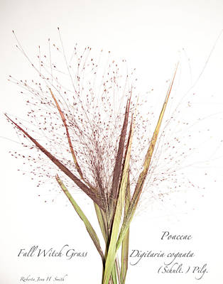 Fall Witch Grass Poster