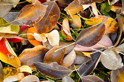 Fallen Autumn Leaves - Kittitas County - Washington - October 2013 Poster by Steve G Bisig