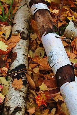 Fallen Birch Poster