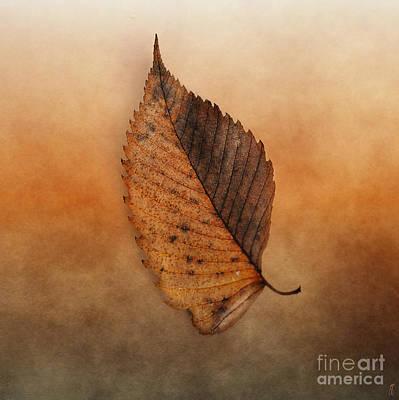 Fallen Brown Leaf Poster