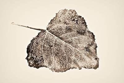 Fallen Leaf In Antique T Poster by Greg Jackson