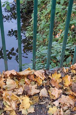 Fallen Leaves Poster by Carol Lynch