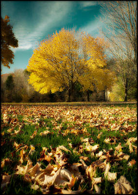 Fallen Leaves Poster by Cindy Haggerty