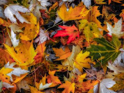 Fallen Leaves Poster by Dennis Bucklin