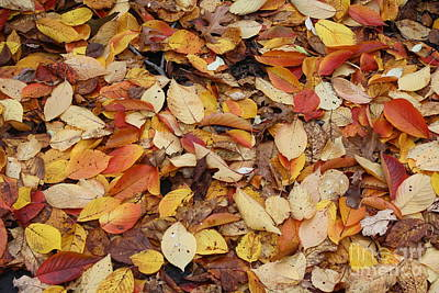 Poster featuring the photograph Fallen Leaves by Dora Sofia Caputo Photographic Art and Design