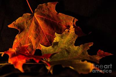 Fallen Leaves Poster by Judy Wolinsky