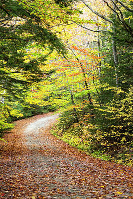 Fallen Leaves Litter A Forest Road Poster