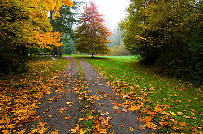 Fallen Leaves On A Road, Washington Poster by Panoramic Images
