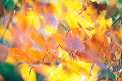 Fallen Leaves On Ground With Backlit Poster