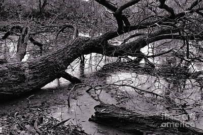 Fallen Tree Poster by Dariusz Gudowicz