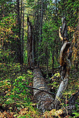 Poster featuring the photograph Fallen Tree by Sam Rosen