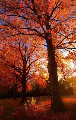 Fall's Splendor Poster by Phil Koch