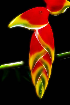 False Bird Of Paradise Poster