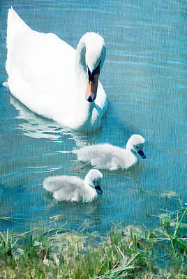 Family Of Swans At The Market Common Poster