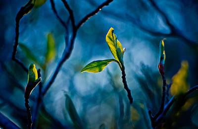 Fantasy In Blue Poster by Linda Unger
