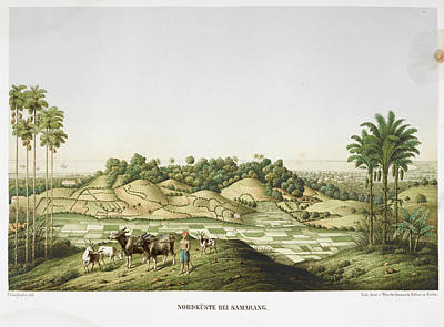 Farmer With Goats And Oxen Poster